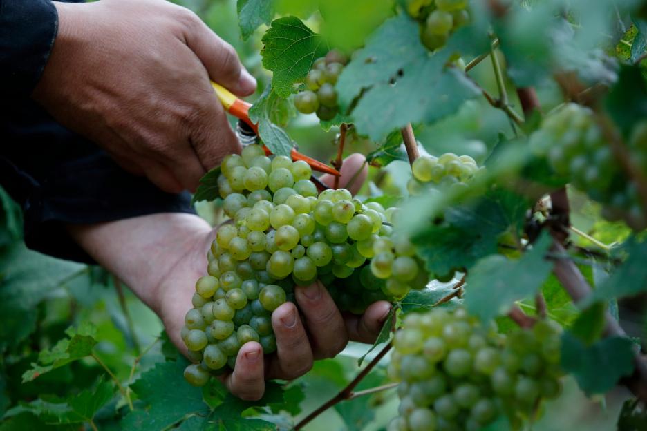 Viini Säilyy Avattuna